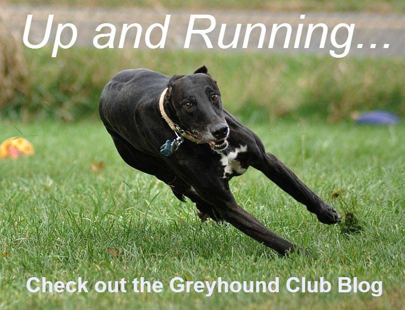 Greyhound Club Blog